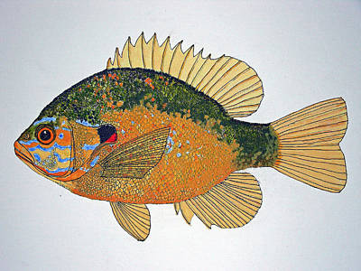 Sunfish South Usa Art Print by Don Seago