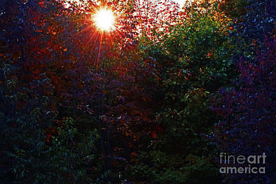 Photograph - October Sunflare by Patti Whitten