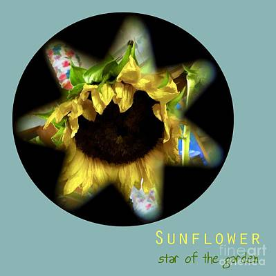 Photograph - Sunflower . Star Of The Garden by Renee Trenholm