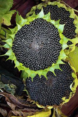 Photograph - Sunflower 01 by Edgar Laureano