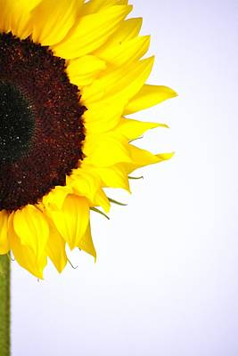 Lucille Ball - Sunflower #016 by Noranne AG