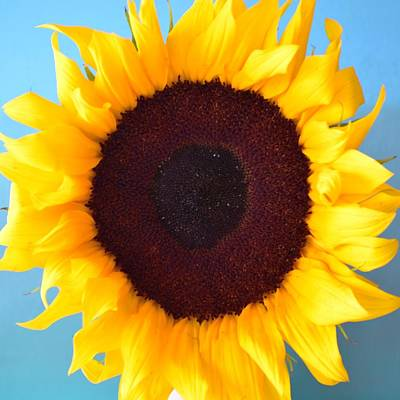 Bath Time - Sunflower #026 by Noranne AG