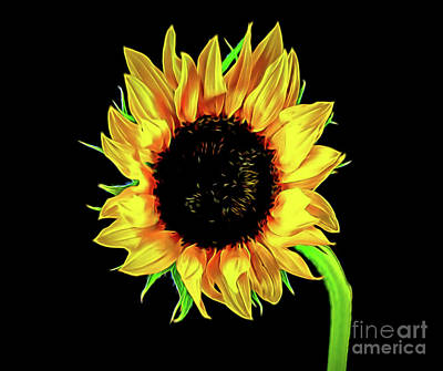 Photograph - Sunflower 1-5 by Ray Shrewsberry