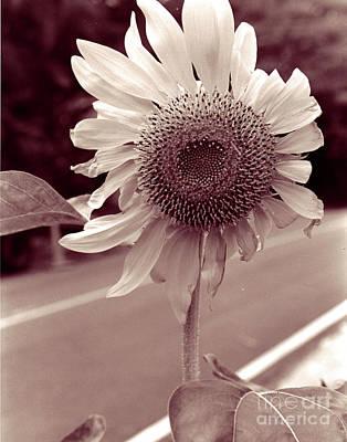 Art Print featuring the photograph Sunflower 1 by Mukta Gupta