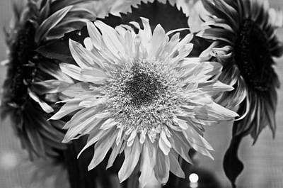 Photograph - Sunflower 1 by Simone Ochrym