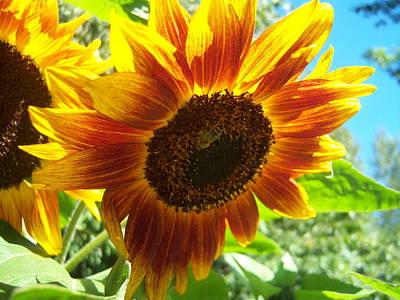 Sunflower 104 Art Print by Ken Day