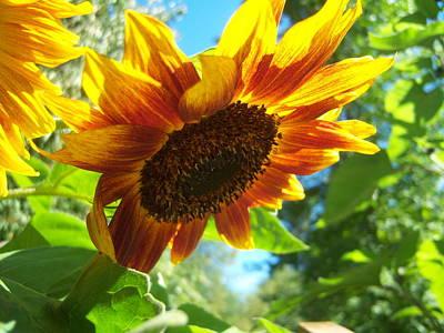 Sunflower  119 Art Print by Ken Day