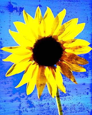 Photograph - Sunflower 12 by Marty Koch