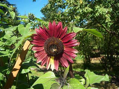 Sunflower 126 Art Print by Ken Day