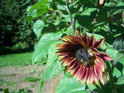 Sunflower 134 Art Print by Ken Day