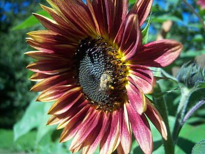 Sunflower 147 Art Print by Ken Day