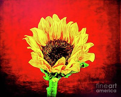 Photograph - Sunflower 18-27 by Ray Shrewsberry