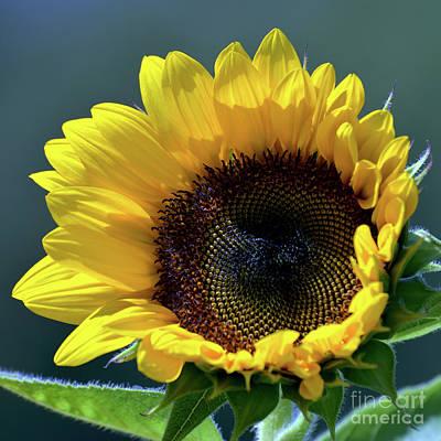 Travel - Sunflower 1940 by Terri Winkler
