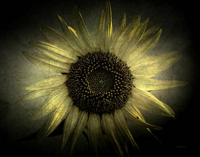 Photograph - Sunflower 2 by Cynthia Lassiter