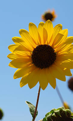 Photograph - Sunflower 2 by James Granberry