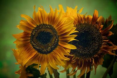 Photograph - Sunflower 2 by Simone Ochrym