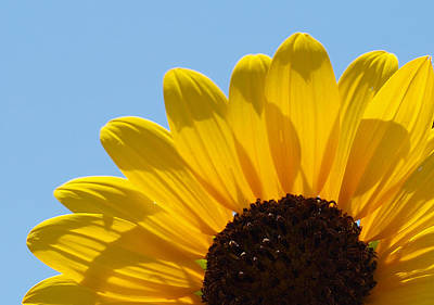 Photograph - Sunflower 3 by James Granberry