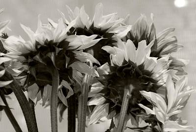 Photograph - Sunflower 3 by Simone Ochrym