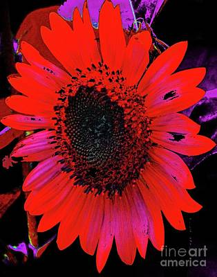 Photograph - Sunflower 33  Zowie by Lizi Beard-Ward