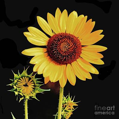 Photograph - Sunflower 36 by Lizi Beard-Ward