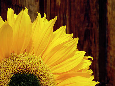 Photograph - Sunflower - 365-156 by Inge Riis McDonald