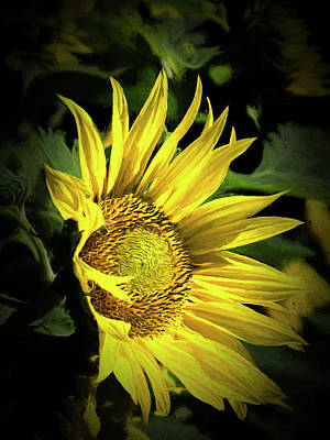 Photograph - Sunflower - 365-165 by Inge Riis McDonald