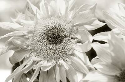 Photograph - Sunflower 4 by Simone Ochrym