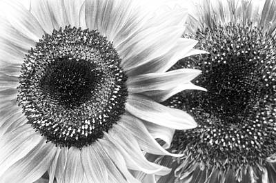 Photograph - Sunflower 5 by Simone Ochrym