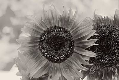 Photograph - Sunflower 6 by Simone Ochrym