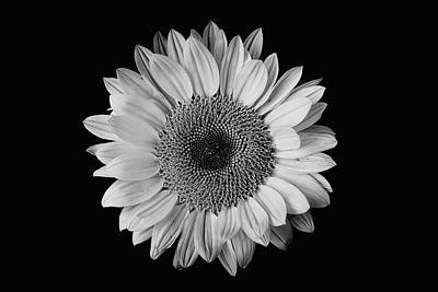 Photograph - Sunflower #7 by Desmond Manny