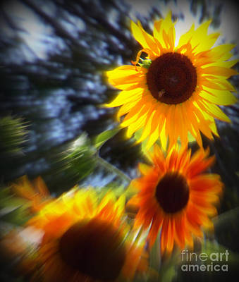 Photograph - Sunflower Abstract  by Bobbee Rickard