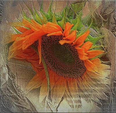 Photograph - Sunflower Abstract by Sherman Perry