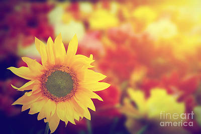 Ray Photograph - Sunflower Among Other Spring Summer Flowers At Sunshine by Michal Bednarek