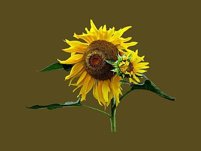 Photograph - Sunflower And Baby by Susan Savad