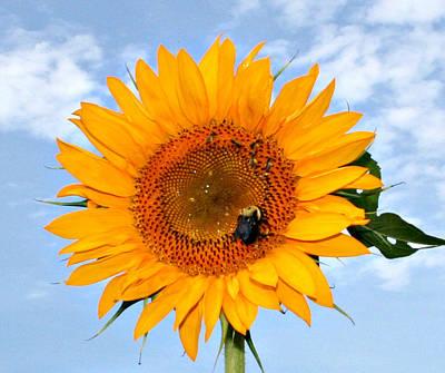 Polaroid Camera - Sunflower and Bee by Jeanne Grunert