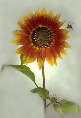 Scanography Mixed Media - Sunflower And Bee by Sandi F Hutchins