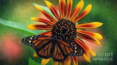 Photograph - Sunflower And Butterfly 2 by Paul Wilford