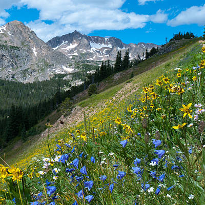 Fine Dining - Sunflower and Harebell Wildflowers in the Indian Peaks by Cascade Colors
