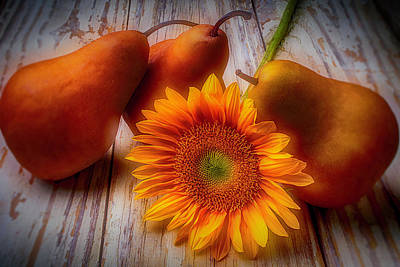 Pear Photograph - Sunflower And Pears by Garry Gay