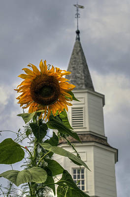 Photograph - Sunflower And Steeple by Jerry Gammon