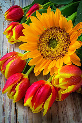 Chip Photograph - Sunflower And Tulips by Garry Gay