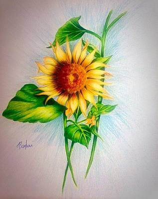 Drawing - Sunflower by Anne Barberi