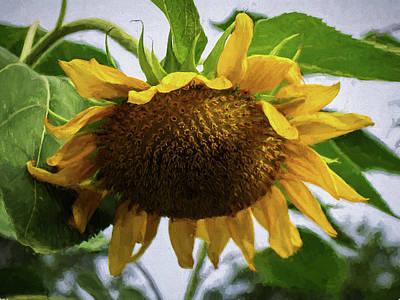 Sunflower Art II Art Print