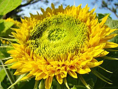Movie Tees - Sunflower art prints Yellow Sun Flower by Baslee Troutman