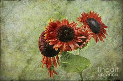 Sunflower Photograph - Sunflower Art by Sari Sauls