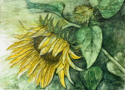Sunflower At Dusk Art Print by Sandy Clift