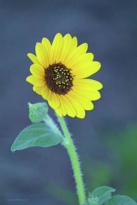 Photograph - Sunflower by Inspirational Photo Creations Audrey Taylor