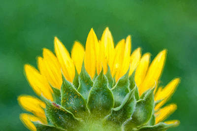 Photograph - Sunflower Back  by Terry DeLuco