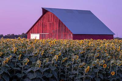 Photograph - Sunflower Barn by Robin Mayoff