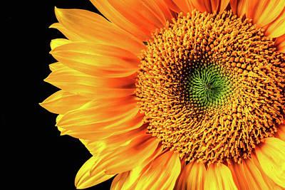Sunflower Beauty Close Up Art Print
